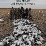 "This is one of the best days I have ever seen on our spring snow goose hunts. This field shot 216 snow geese on March 11, 2009. This day is often referred to as ""Bloody Wednesday"" because there was so many snow geese shot that day."