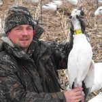 This is our only neck collar during the 2013 Spring Snow Goose Season. Since they have stopped collaring snows several years back they have become increasingly rare.