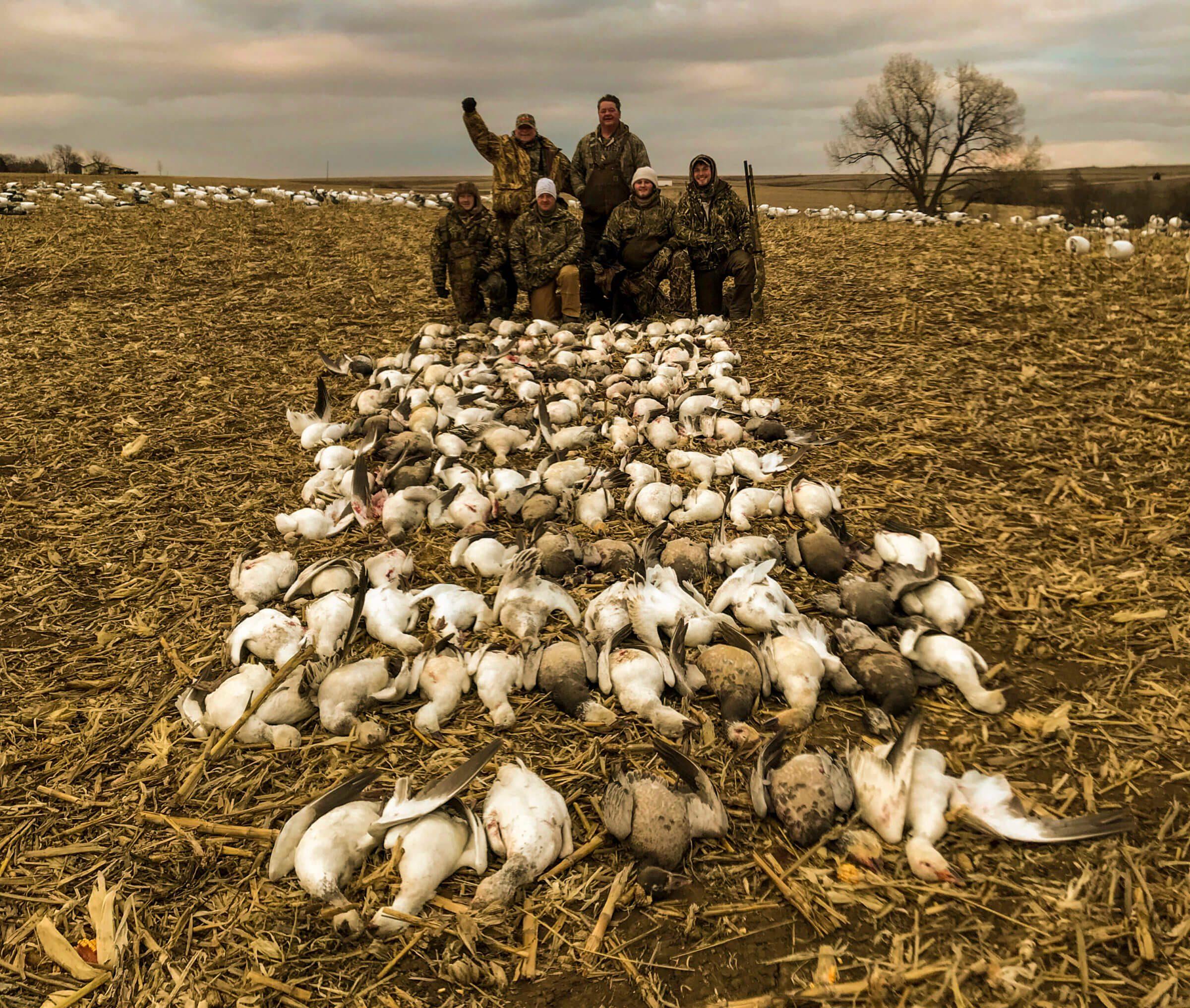 Spring Snow Goose Hunts Arkansas
